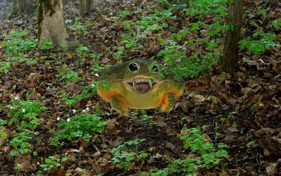 BREAKING: Chilling New Invasive Frog Species Spotted in North America